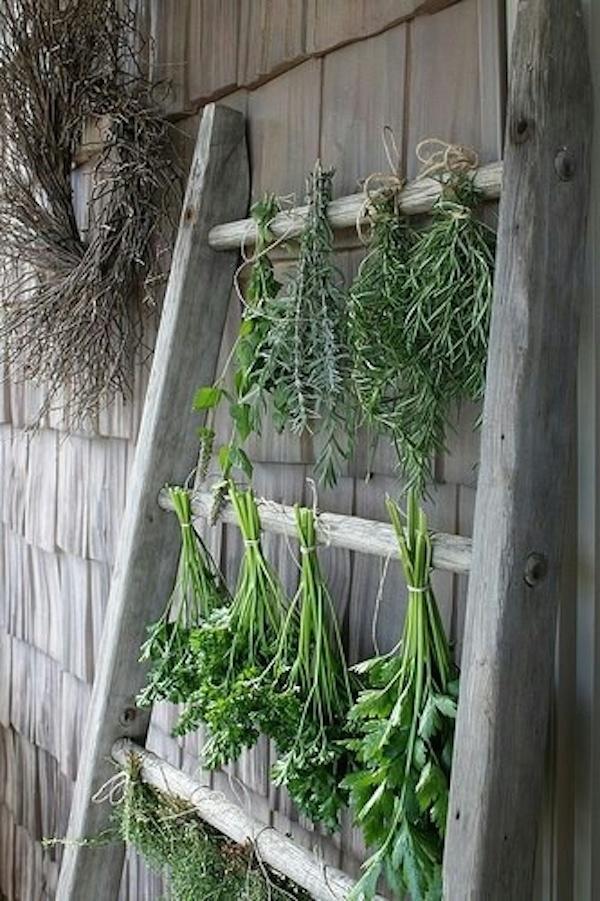 vintage-ladder-herbs